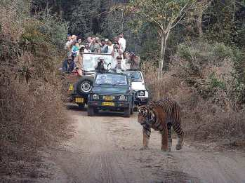 """Tiger-Wild-Life-Photography-India"""