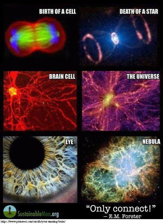 """Brain cell = Cosmos=Brahman=Shiva=OM"""